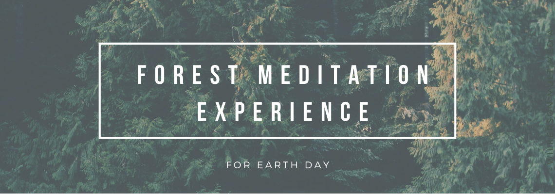 Forest Meditation Experience